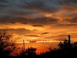 Sonoran Sunset Delight by RooCat