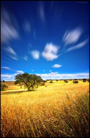 Endless Plains... by Inebriantia