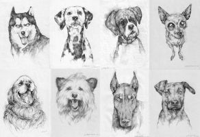 Dog Series by prab-prab