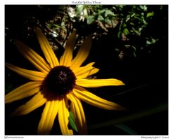 Untitled Yellow Flower by yellowcaseartist