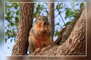 Scotty The Squirrel by Mac-Wiz