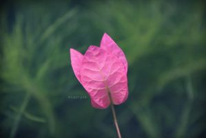 ..prEtty piNk papEr.. by tnTyJ