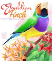 Gouldian Finch and Ixora by MondoArt