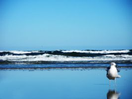 A Lonely Seagull pt. 1 by Phillysoul11