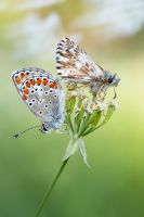 About butterflies and wind by Viand