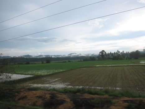 The rice fields under a cloudy sky by Scarletcat1