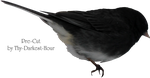 Junco Bird PNG by Thy-Darkest-Hour
