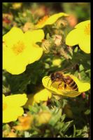 busy bee by netbandit