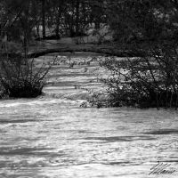 The River II by NNarcissus