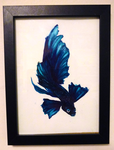 Watercolour Siamese Fighting Fish 3 by canned-sardines