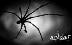 Spider by zy0rg
