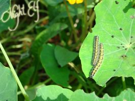 Caterpillars in the Butterfly Garden by Nic1ky