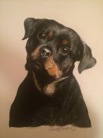 Rottweiler puppy drawing  by EmmaCawston