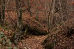 Autumn Woods6 by NHuval-stock