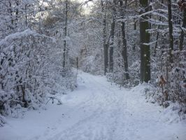 Snowy Path Stock- 1 by Crystelly