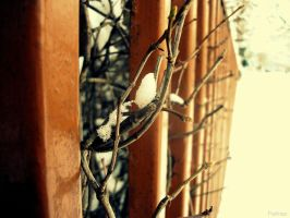 Branches by Poetrass