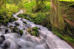 Wahkeena Creek in Spring by La-Vita-a-Bella