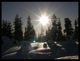 Sun over snowy trees by lexidh