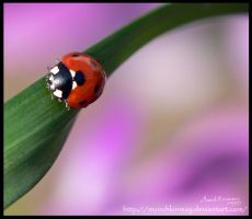 Little ladybird by Munchkinmay