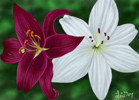 Pink and White Lillies by Leia1987