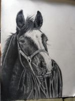 Winter Horse Portrait by EquineArtist-Fanatic