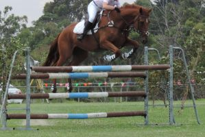 Chestnut ShowJumping Horse Stock by theSilverJackaL
