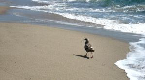 Seagull on beach by Zepher-Stock