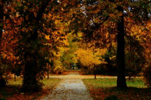 So much this fall 4 by Irinna7