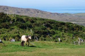 Connemara by Caillean-Photography