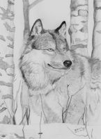 Lonely wolf by BakGuiy