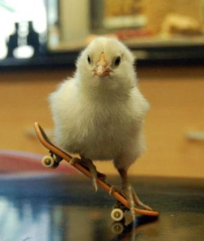 Sk8ter Chick by thoughtless4ever