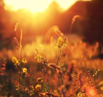 The Golden Hour by Peterix