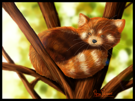 Red Panda by Foxheartt