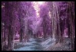 Purple BamBoo by wino999