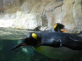 King Penguins by Shadowind