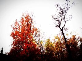 Autum Trees by Axcell-Excels