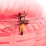 Libellule_dragonfly_ by illusiondevivre