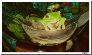 Fish Bowl or Frog Bowl? by FNQ