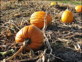 Pumpkin Patch by Alchemical
