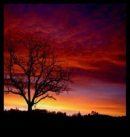 silhouette on red by sayra