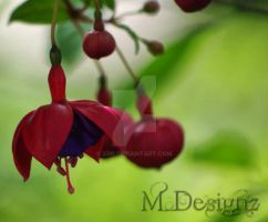 Its Time For Fuschias by 33M