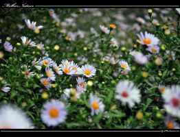 Mother Nature by iuli72an
