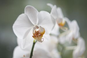 Orchid 3 by KB-Fotografie