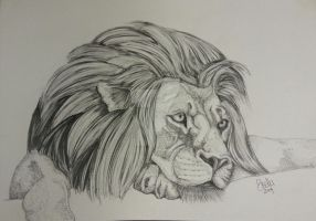The Lion by stellaschmn