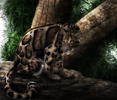 Clouded Leopard by Featherhaze