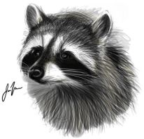 Raccoon by CeruleanRaptor