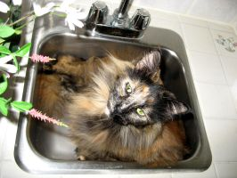 in sink kitty 3 by uberbechin