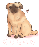 Puga by serpchi