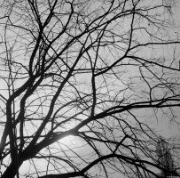 Gamma - Ilford - silhouette by Picture-Bandit