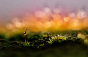 moss.... by AdrianaKH-75